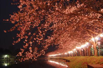 夜桜もお楽しみいただけます。