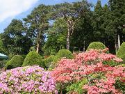 樹温寺庭園