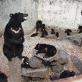 阿仁(あに)熊牧場 「くまくま園」