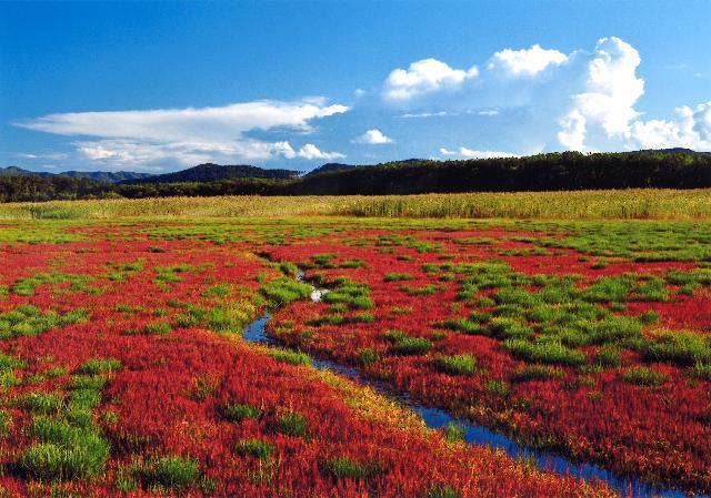 グランプリ 「紅く染まる沼」