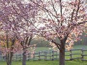 道の駅 桜