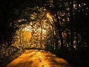 木のトンネル 夕方